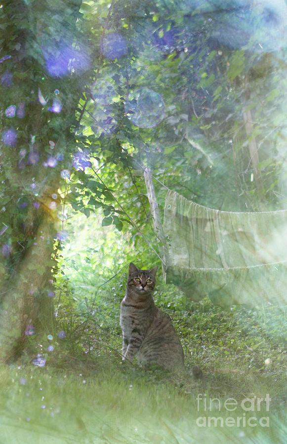In My Garden by Angel Ciesniarska