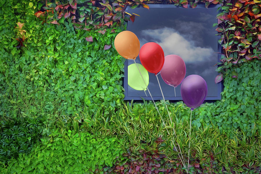 Windows Photograph - In Passing - Balloons - Window by Nikolyn McDonald