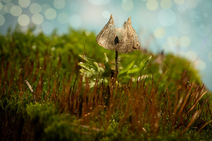 In the Autumn Moss by Maggie Terlecki