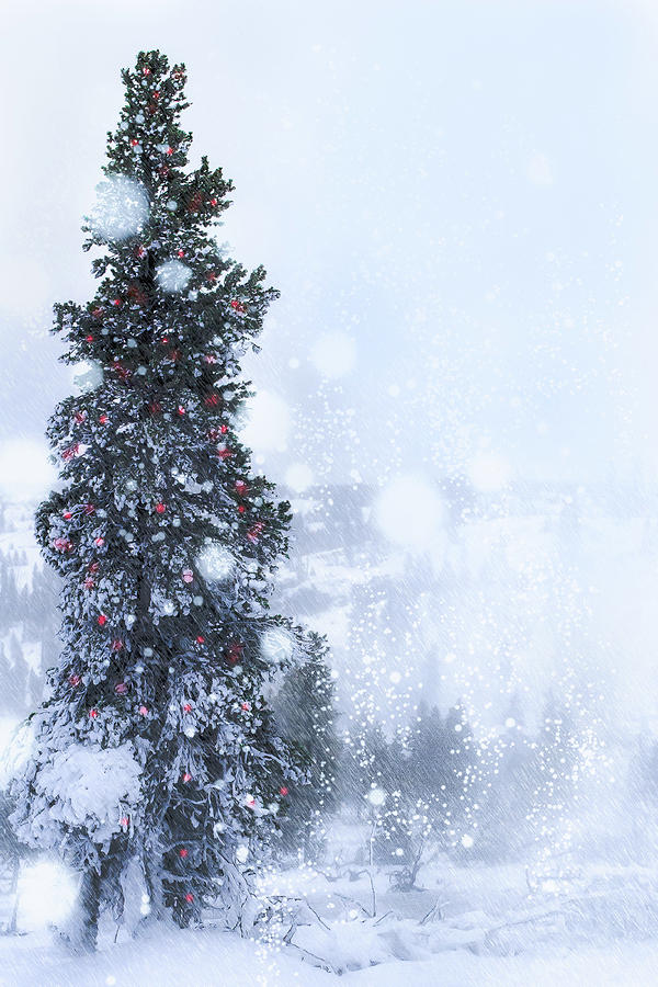 Landscape Photograph - In the Blue Blush of WInters Eve, Yellowstone by Paul Malen