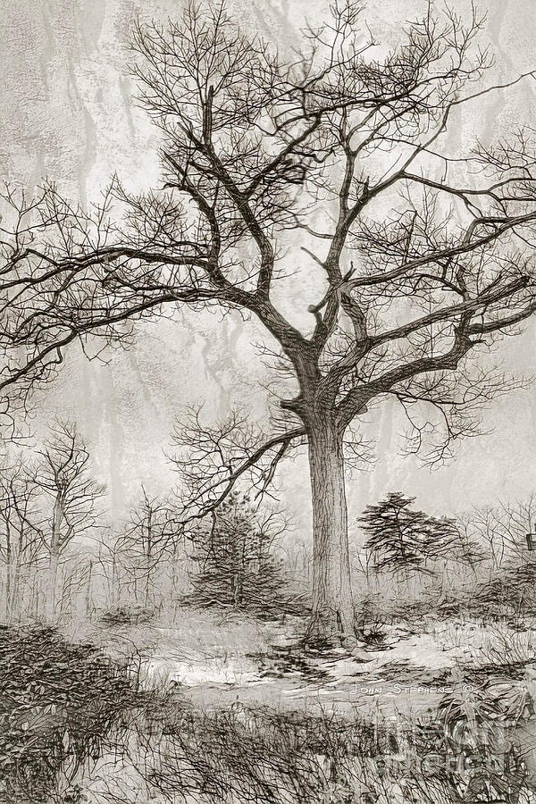 In The Dead Of Winter Photograph