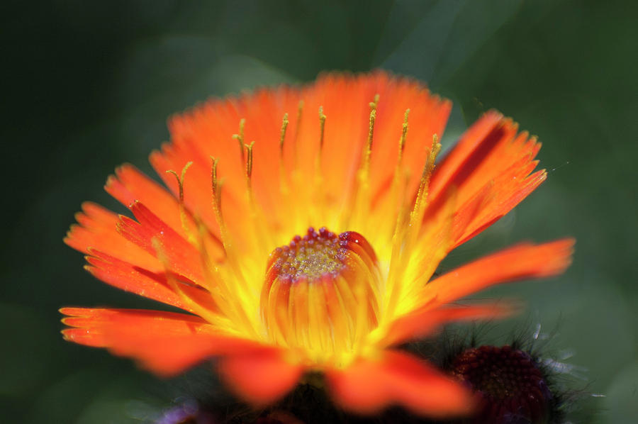 Orange Photograph - In The Eye Of The Beholder by Nathan Carlsen