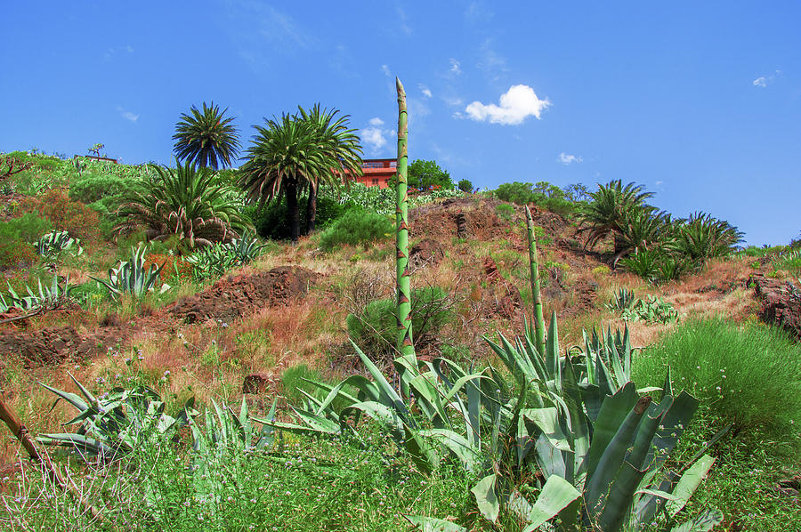 In the fields of Masca by Sun Travels