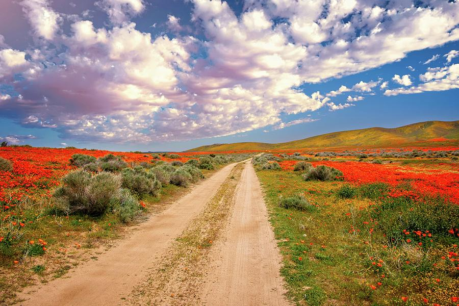 In the Land of Oz - Superbloom 2019 by Lynn Bauer