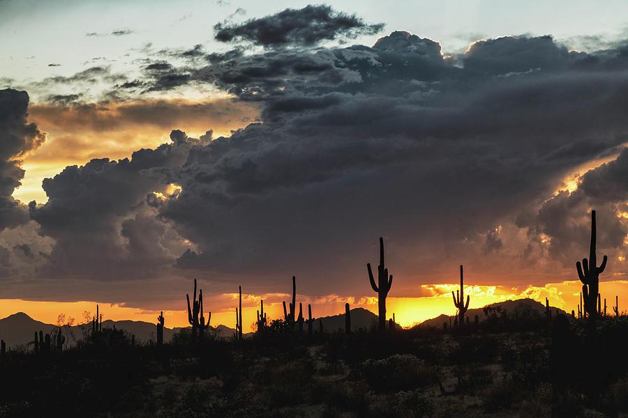 Saguaro Sunset Photograph - In The Shadow Of The Desert  by Saija Lehtonen