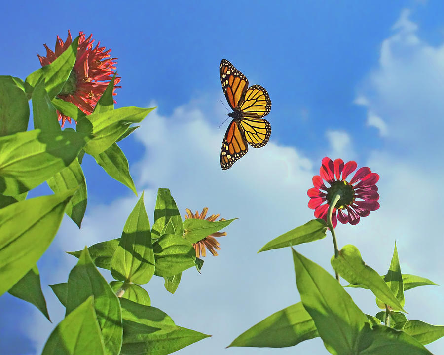 Butterflies Photograph - In The Sky - Monarch Migration - Butterfly by Nikolyn McDonald