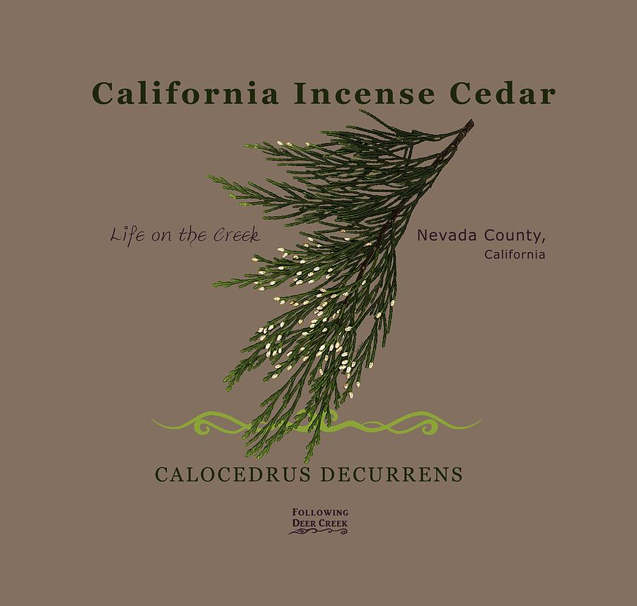 Incense Cedar - brpwn text by Lisa Redfern