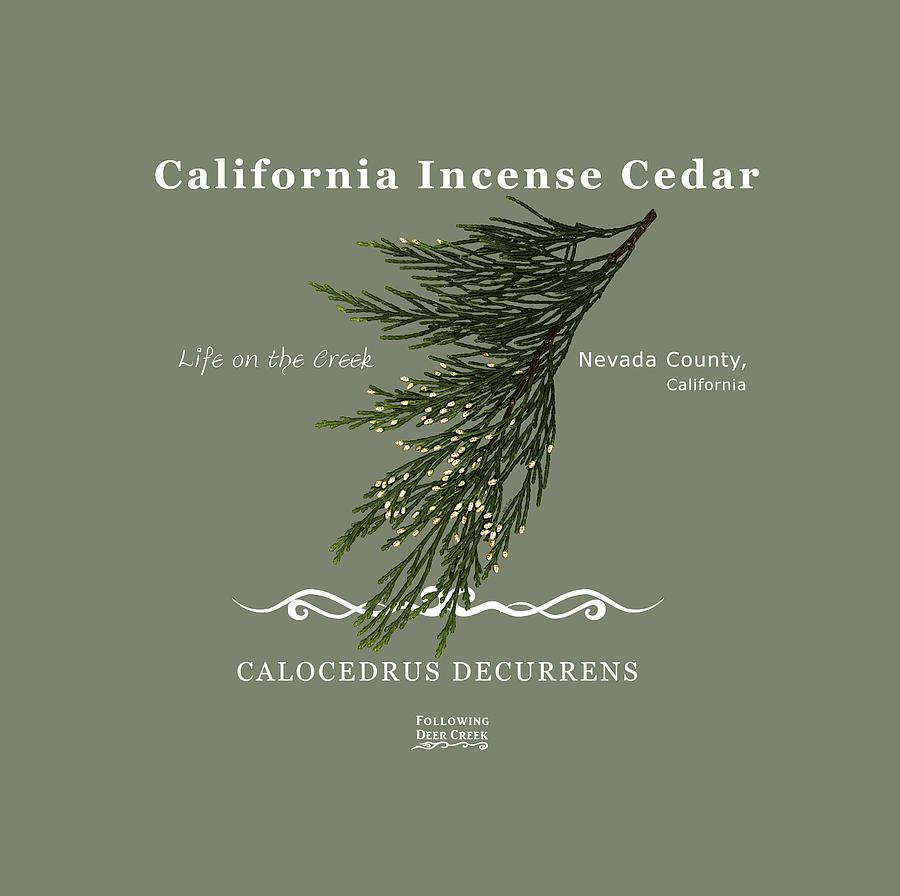 Incense Cedar - white text by Lisa Redfern