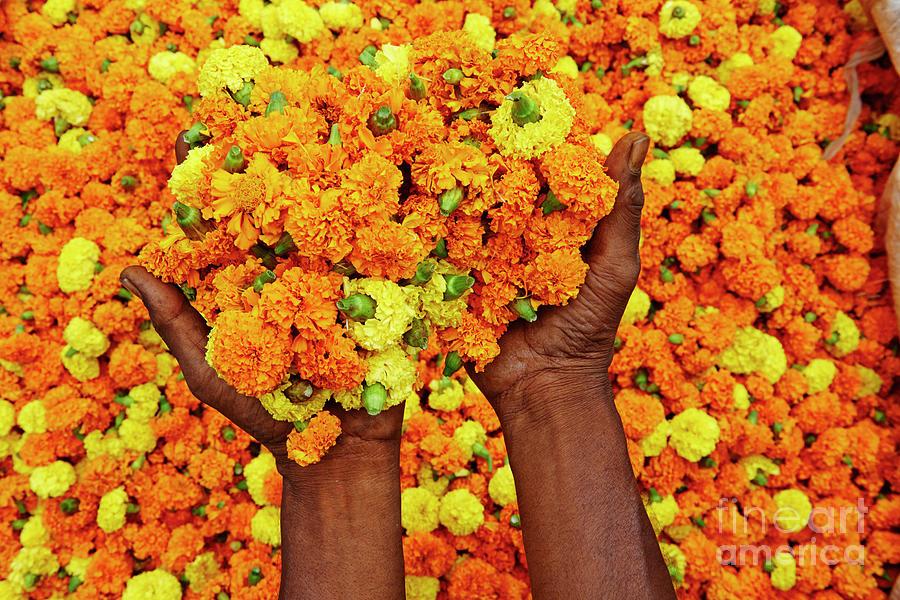 India, Kolkata, Mullik Ghat Flower Photograph by Tuul & Bruno Morandi