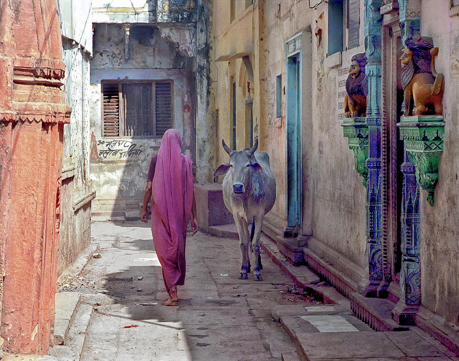 India Lady And Cow Photograph by Glenn Losack