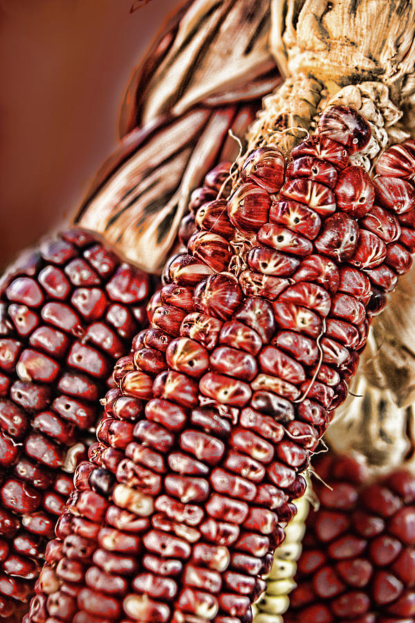Indian Corn by Marie Leslie