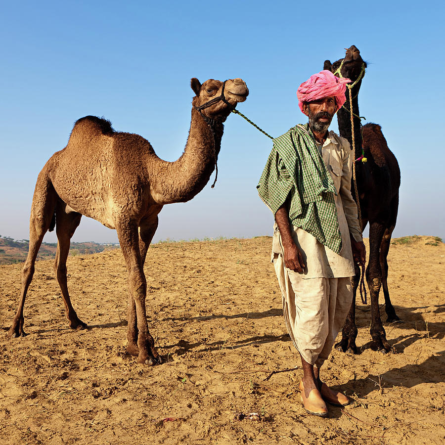 Indian Man With Camels During Festival Photograph by Hadynyah
