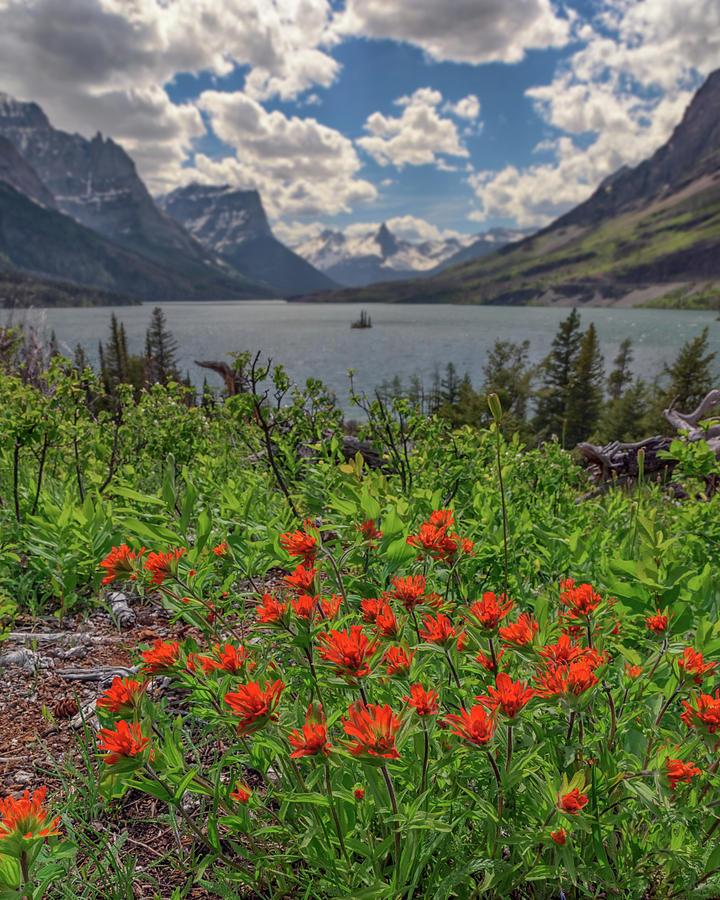 Indian Paintbrush at Saint Mary Lake by Kristen Wilkinson