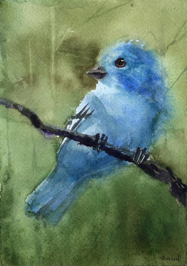 Indigo Bunting by Sean Seal