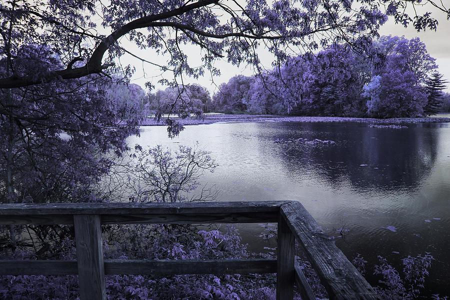 Indigo Marsh by Shawna Rowe