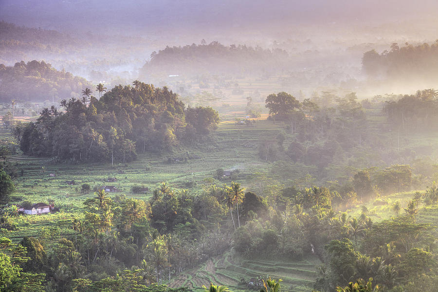 Indonesia, Bali, Forest Landscape Photograph by Michele Falzone