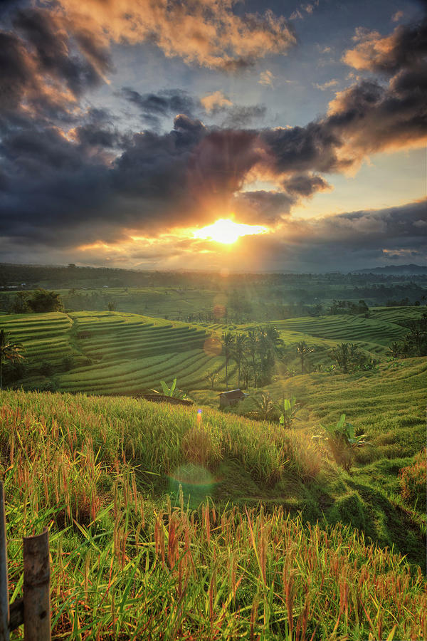 Indonesia, Bali, Jatiluwih Rice Terraces Photograph by Michele Falzone