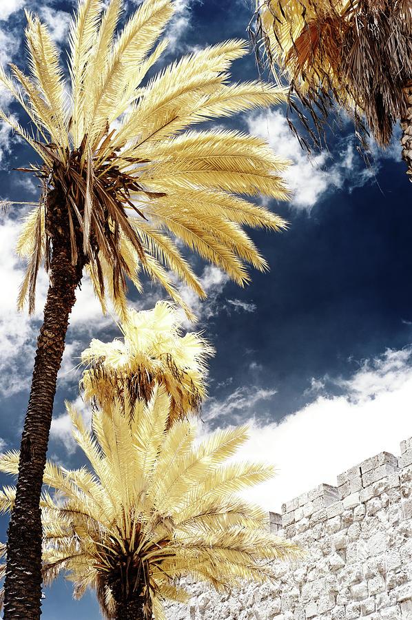 Jerusalem Wall Photograph - Infrared Palm Trees Along The Wall In Jerusalem by John Rizzuto