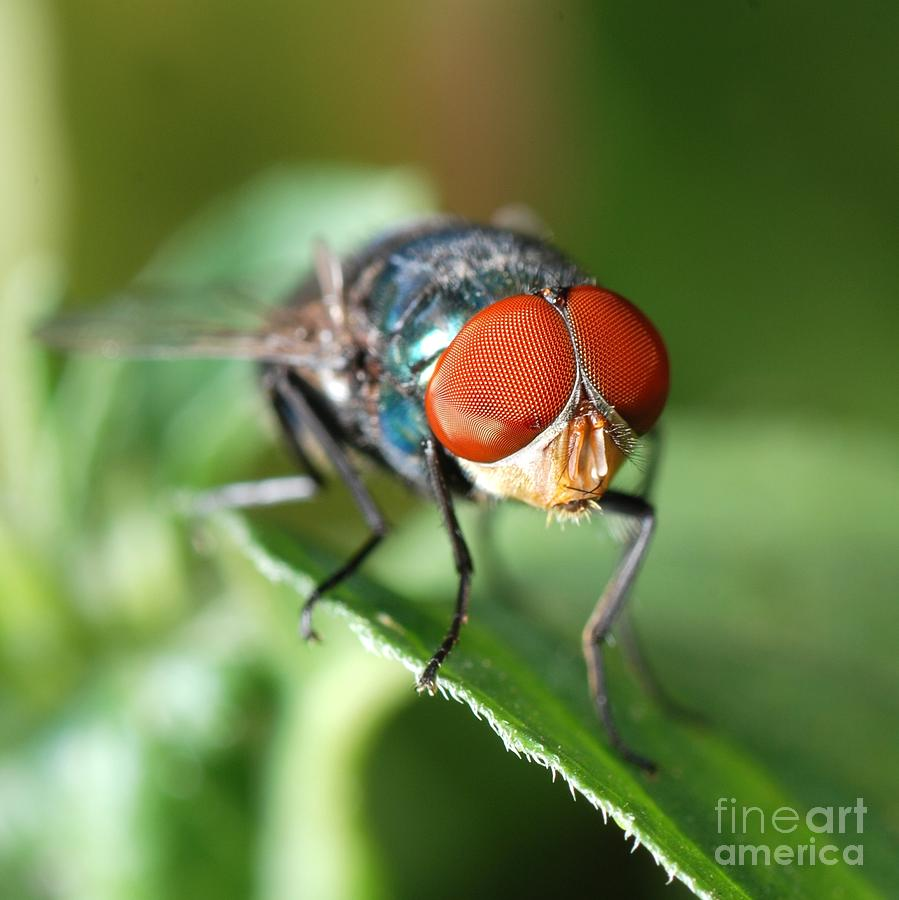 Small Photograph - Insect Fly Macro On Leaf by Pan Xunbin