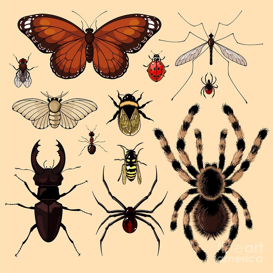 Antenna Digital Art - Insects by Alena Kozlova