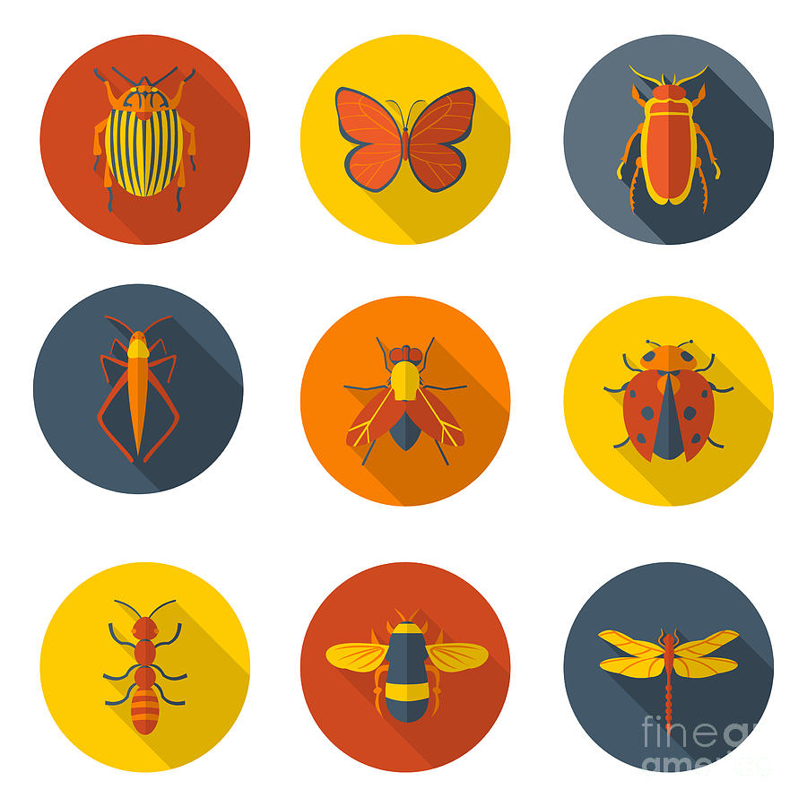 Symbol Digital Art - Insects Flat Icons by Sly Raccoon