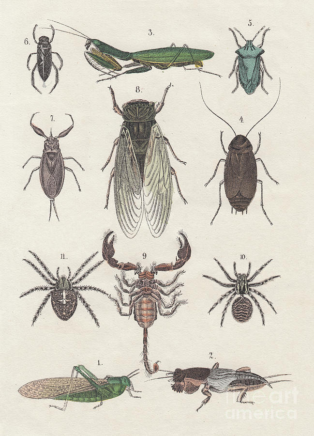 Insects, Hand-colored Lithograph Digital Art by Zu 09