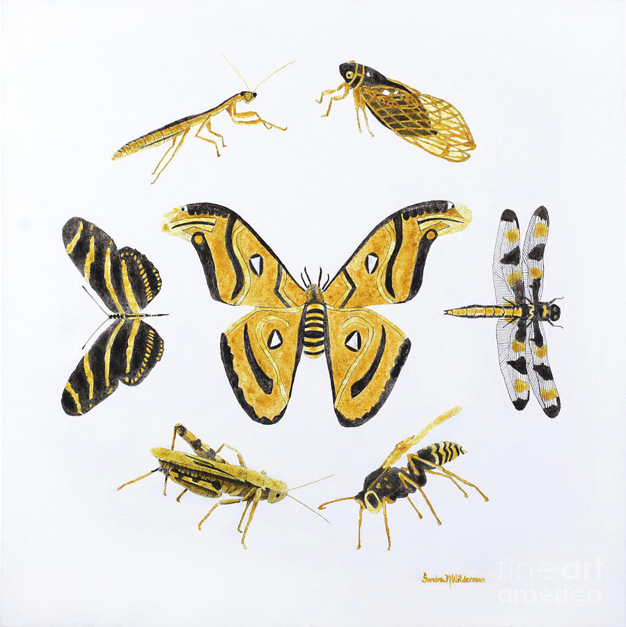Insects We are more alike than we are different by Sandra Neumann Wilderman