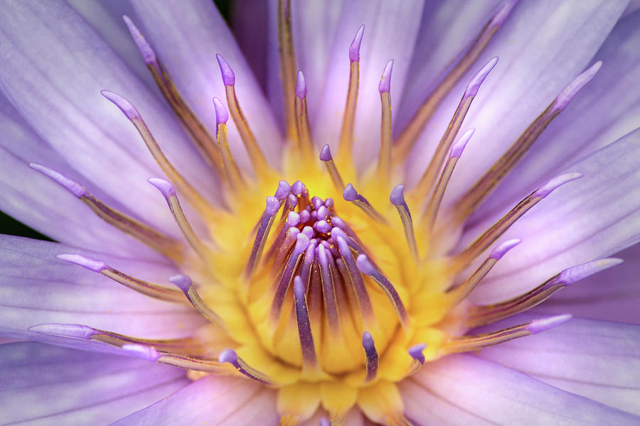 Inside a Water Lily by Don Johnson