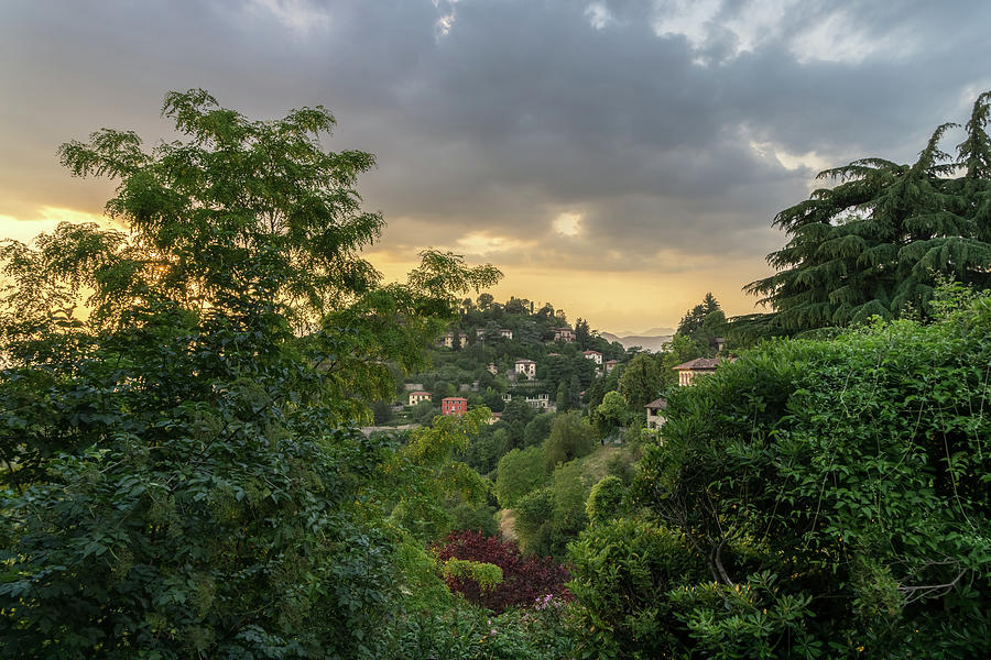 Instantly Choose Your Italian Villa - Days Finale Through the Treetops in Bergamo Lombardy Italy by Georgia Mizuleva