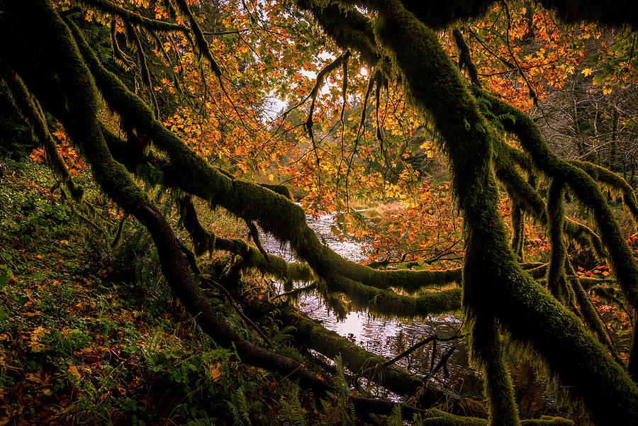 Intimate Autumn 4 by Bill Posner