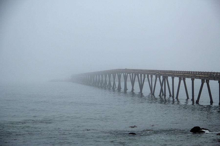 California Photograph - Into The Fog by Marie Leslie