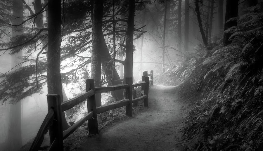 Into the Mist and Light BW by Don Schwartz