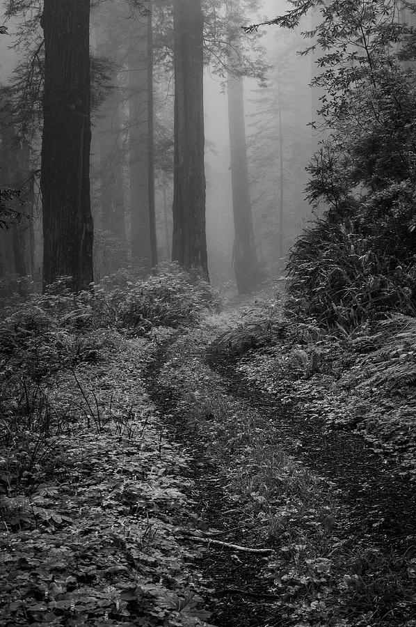 Into the Mist B / W  by George Buxbaum
