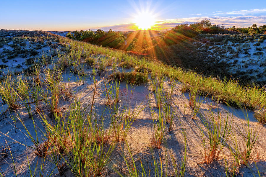Into The Sun, Crane Beach by Michael Hubley