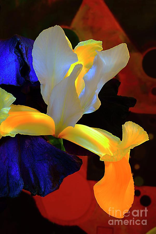 Iris Flowers. Photograph