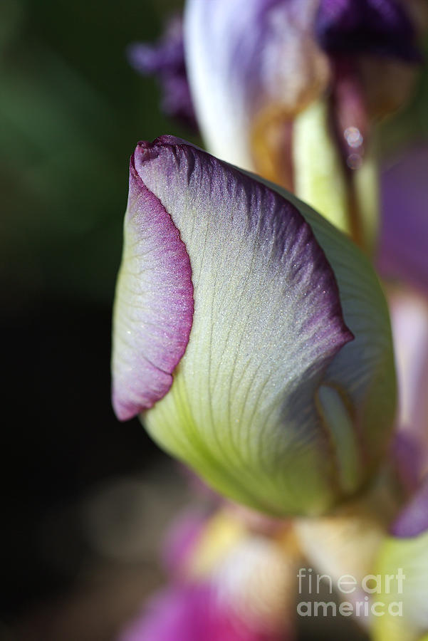 Iris Forming New Life by Joy Watson
