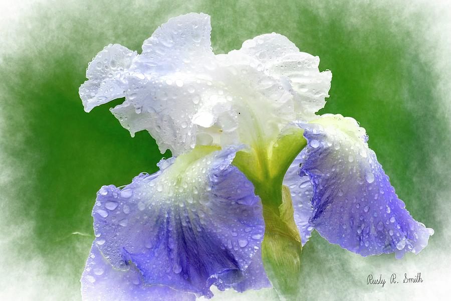 Iris in the rain by Rusty R Smith