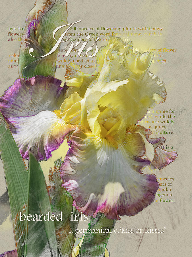 Iris, 'Kiss of Kisses' Graphic by Mark Mille