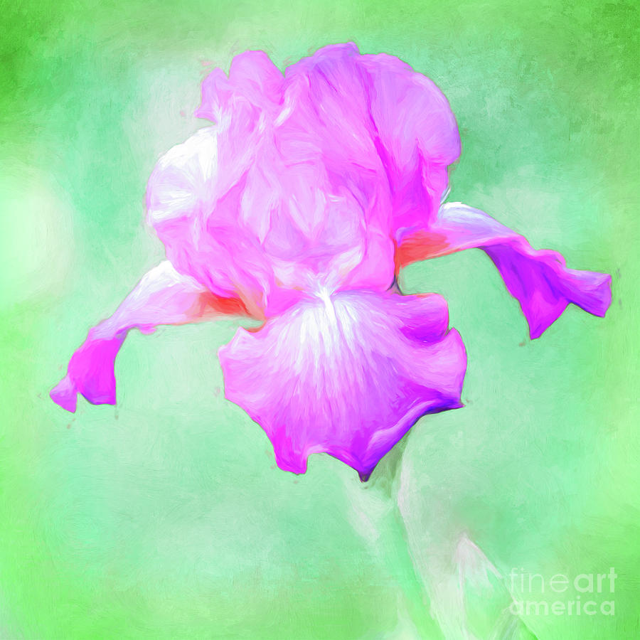 Iris Ready to Fly by Anita Pollak