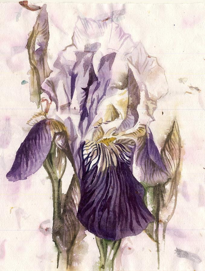 iris watercolor on hand made paper by Alfred Ng