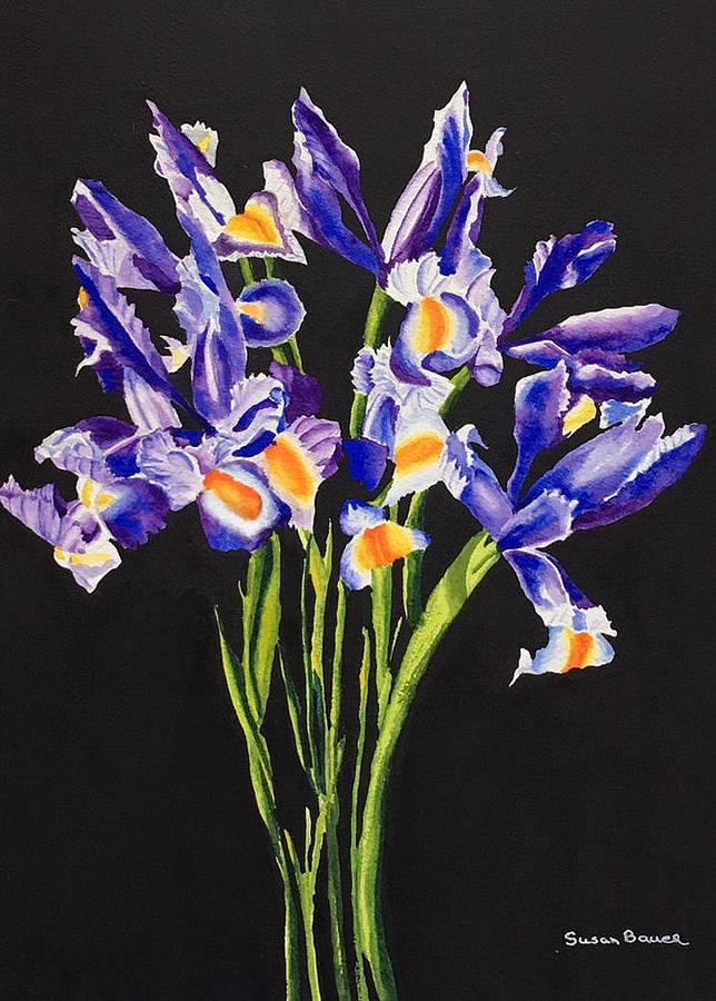 Irises by Susan Bauer