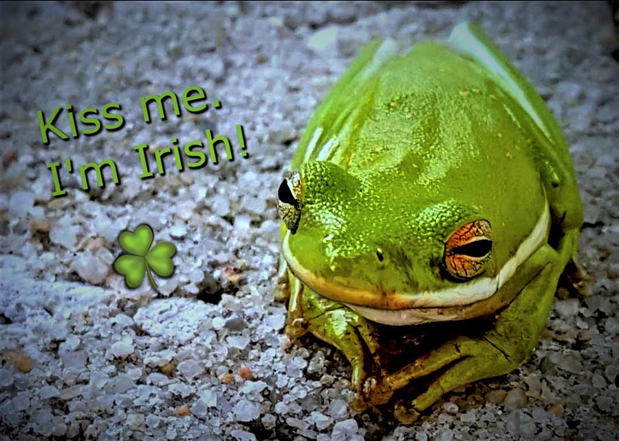 Frog Photograph - Irish Frog by Vincent Autenrieb