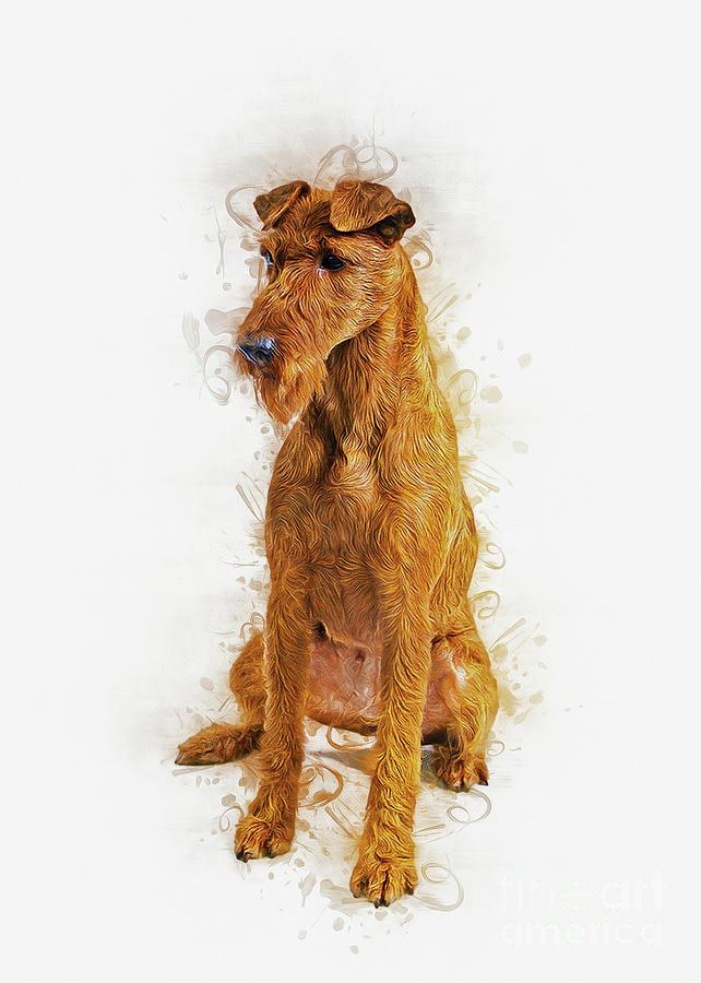 Irish Terrier by Ian Mitchell