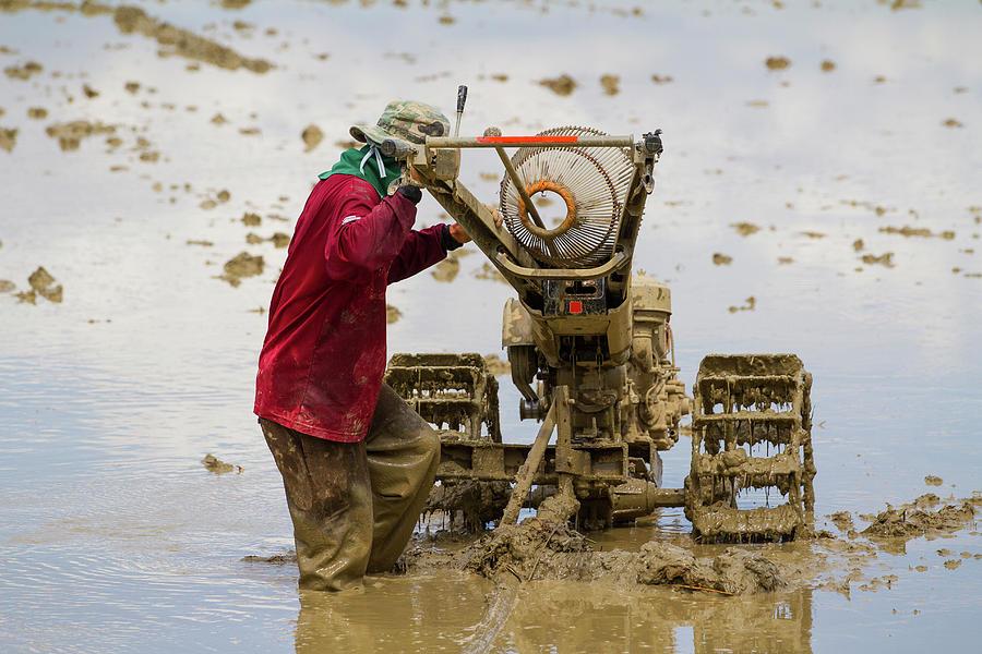 Iron Buffalo Down In A Rice Field Photograph by Jean-claude Soboul