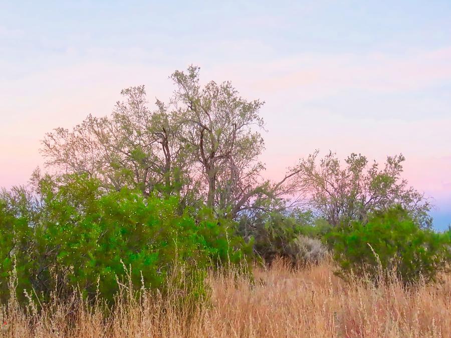 Ironwood Trees After Sundown by Judy Kennedy