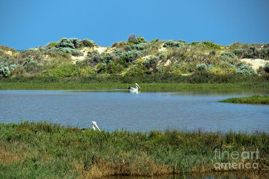 Irwin River Estuary,  Port Denison, by Elaine Teague