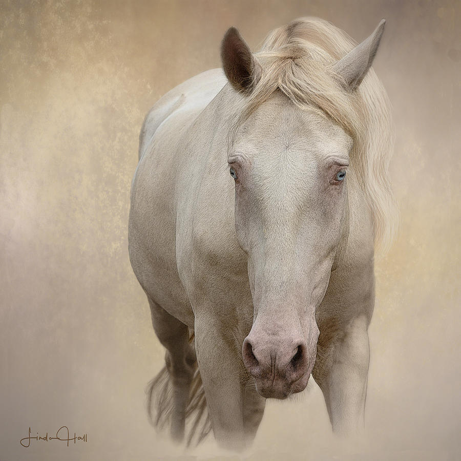 Cream Digital Art - Is That a Treat in Your Hand by Linda Lee Hall