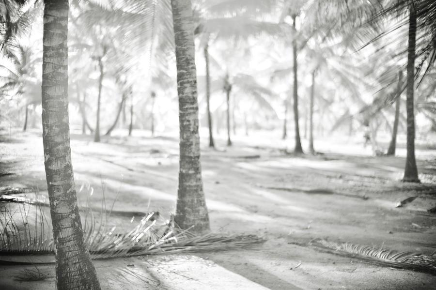 Island Life by Trinidad Dreamscape