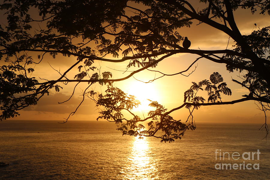 Tropical Photograph - Island Sunset by Christine Chin-Fook