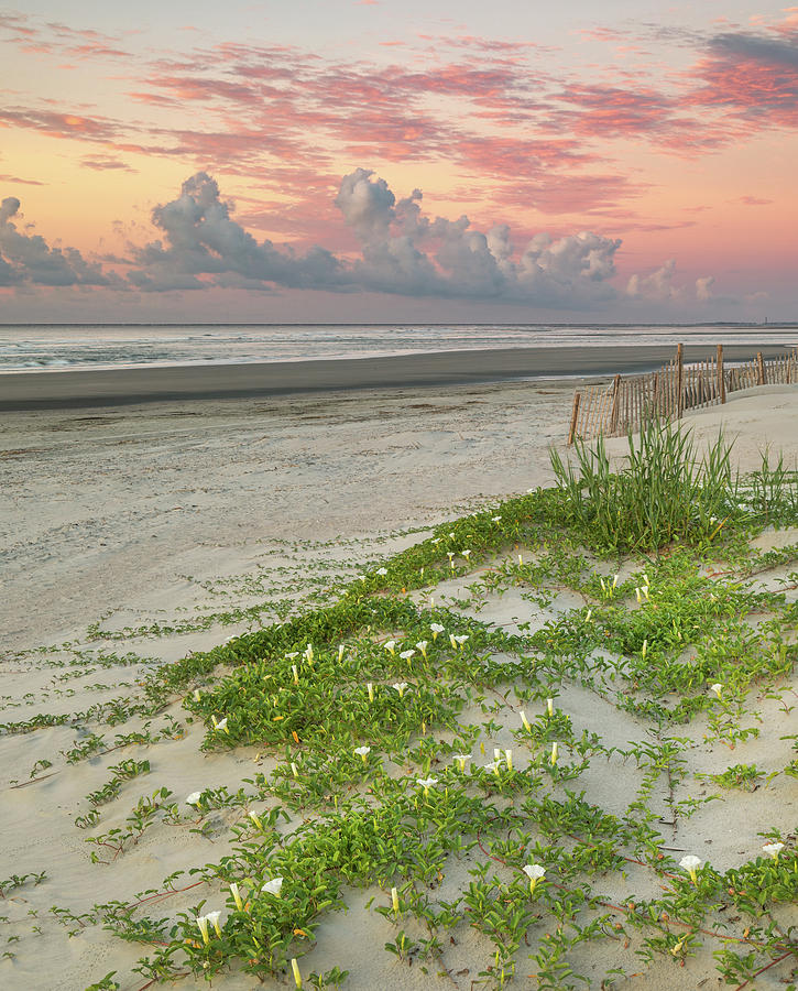 Isle of Palms Beach Morning Colors  by Donnie Whitaker